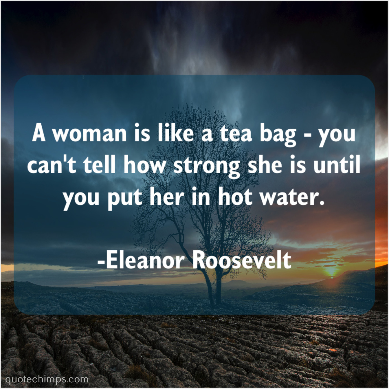Eleanor Roosevelt A Woman Is Like A Quote Chimps